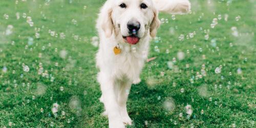Dog walking in grass